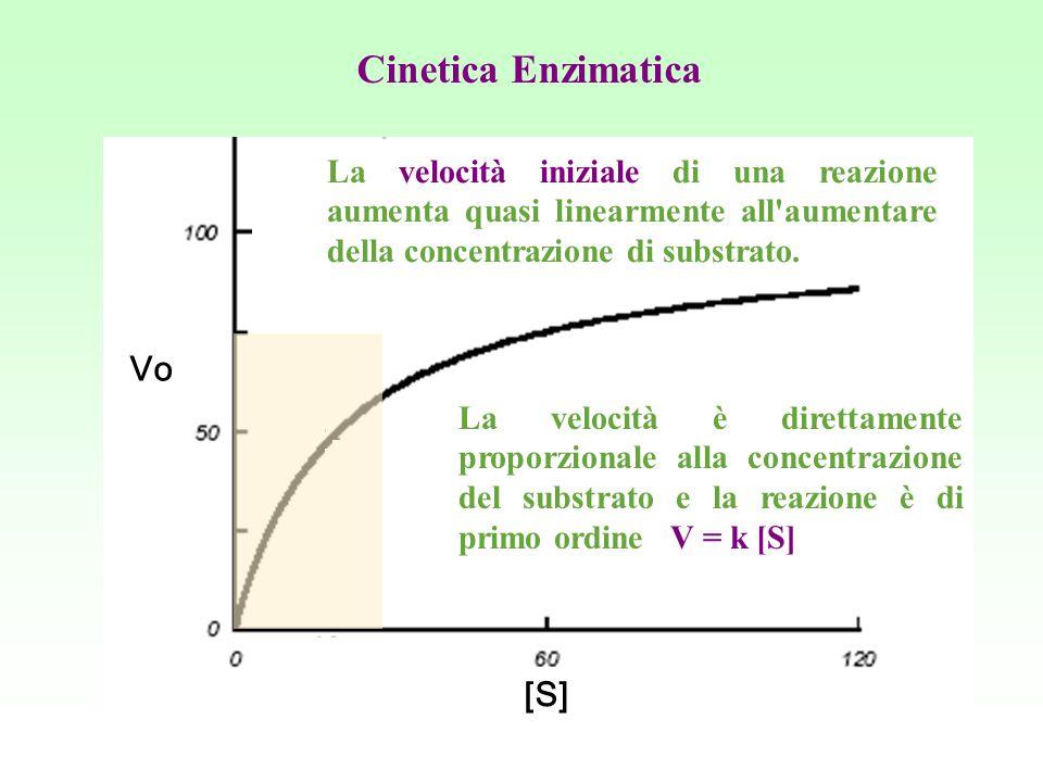 Cinetica Enzimatica Vo [S]